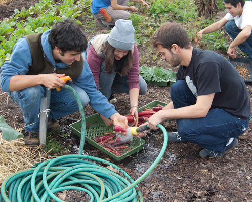 students wash vegetables at community garden