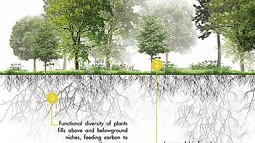 Graphic of trees and root system
