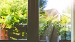 plant on window sill in sunlight